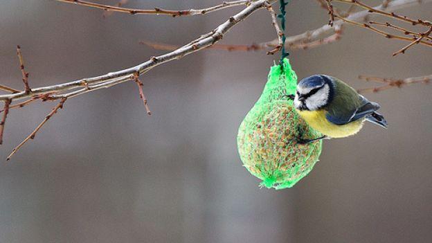 immagine da qui: http://www.deabyday.tv/cuccioli/alimentazione/guide/5116/Come-preparare-una-gustosa-ricetta-per-la-mangiatoia-degli-uccelli-selvatici.html